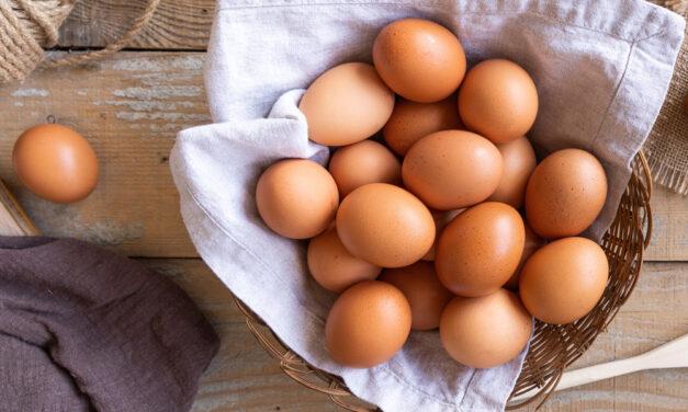 Jajowar – dlaczego warto go kupić?